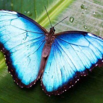 Πεταλούδα σε μέγεθος πουλιού ανακαλύφθηκε στο Τσερνόμπιλ!(photo)